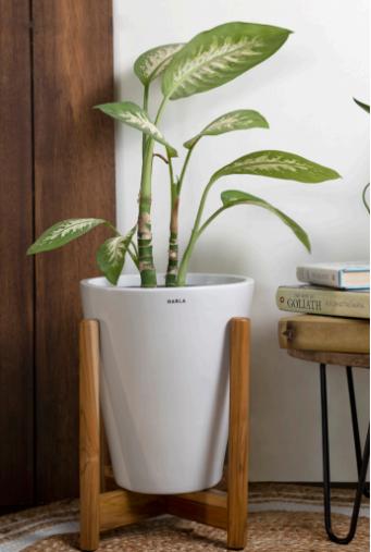BKR® Ceramic Love Bite Pots with Wooden Stand (White,Black)