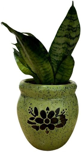 BKR® Snake Plant, Sansevieria, Easy-Care, Indoor air Purifier with Ceramic Pot