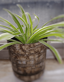 BKR® Air Purifier Spider Plant LG0608